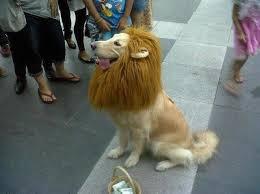 tula leon